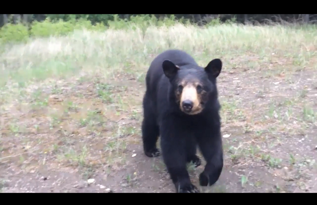 VIDEO: Black bear stalks joggers